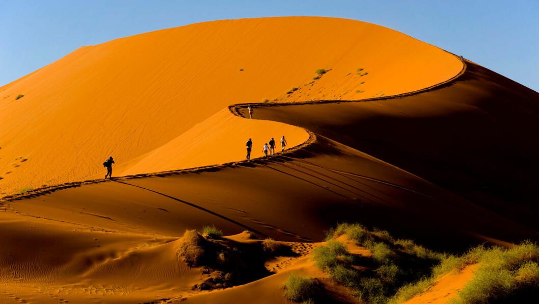 ET UFORGLEMMELIG FARGESPILL: I Sossusvlei ligger Namibias ikoniske, rød-oransje sanddyner. Fargen skifter med lyset, og de eldste sanddynene har den mest intense fargen. Til tross for den minimal tilgang på vann lever det både planter og dyr i ørkensanden. Foto: Vista Travel
