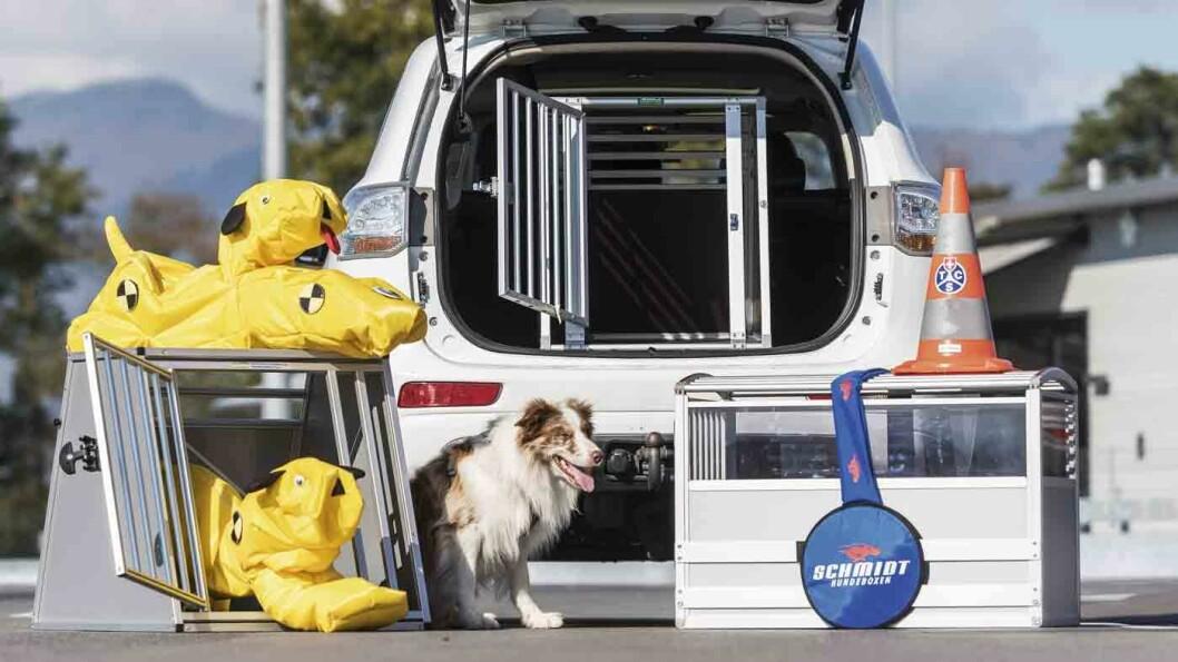 SIKRE HUNDEN I BIL: En løs hund kan komme som et prosjektil gjennom kupeen og være svært farlig for passasjerene, viser NAFs store test. Et hundebur gir best sikkerhet for hund og fører.