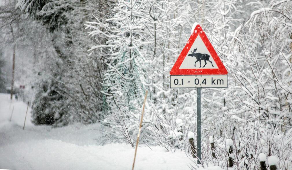 Kraftig økning i viltkollisjoner