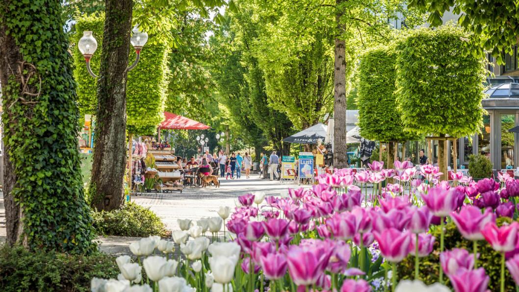 EN OASE: Gågaten i Bad Reichenhall er som en park med frodige trær og fargerike blomster.