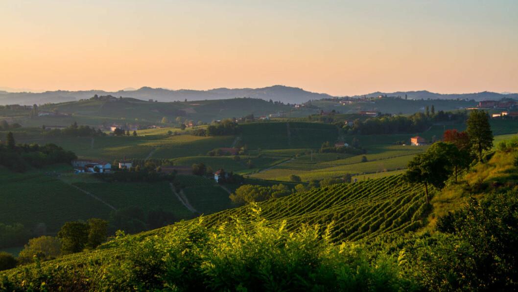 BØLGENDE LANDSKAP: Myke åsrygger og vinmarker, sjarmerende landsbyer og gode restauranter preger Piemonte. Og alt skjer i et deilig og avslappet tempo. Foto: Shutterstock
