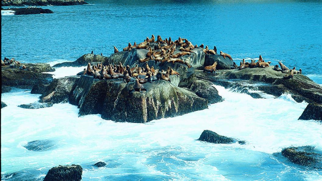 RIKT DYRELIV: De chilenske fjordene er fantastiske, med glitrende sjøer og et rikt utvalg av sjøpattedyr og fugler.