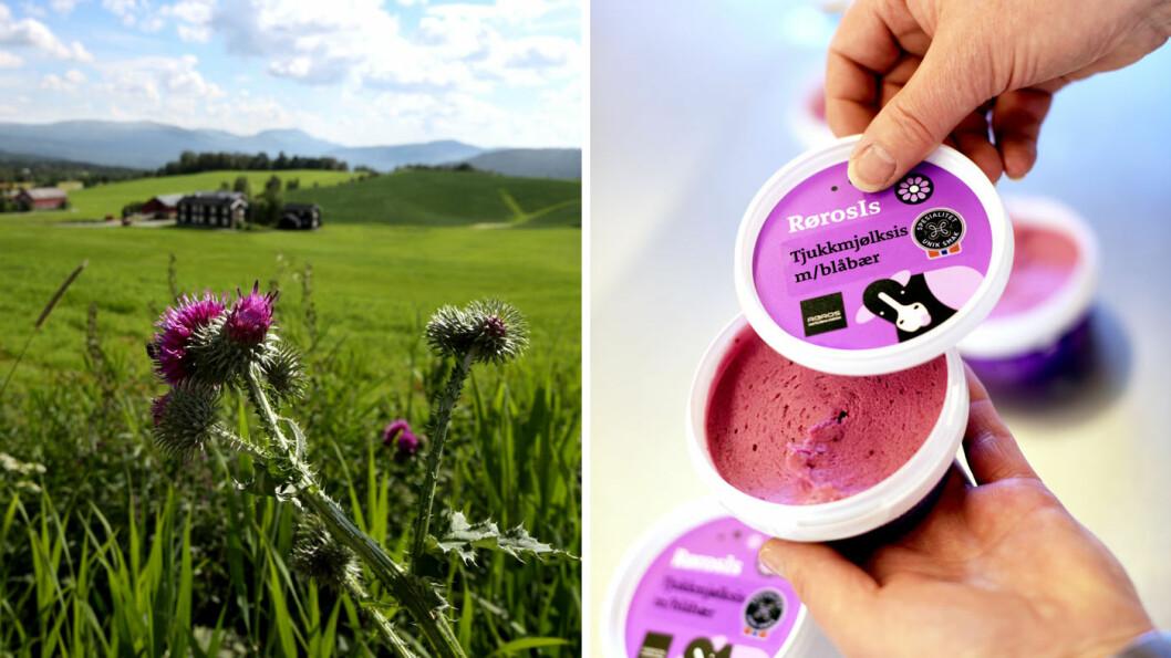 LOKALE FRISTELSER: Rørosmeieriet har gjort lykke med sine økologiske melkeprodukter, blant annet en tjukkmjølksis. Foto: Destinasjon Røros, Christine Baglo og Marius Rua