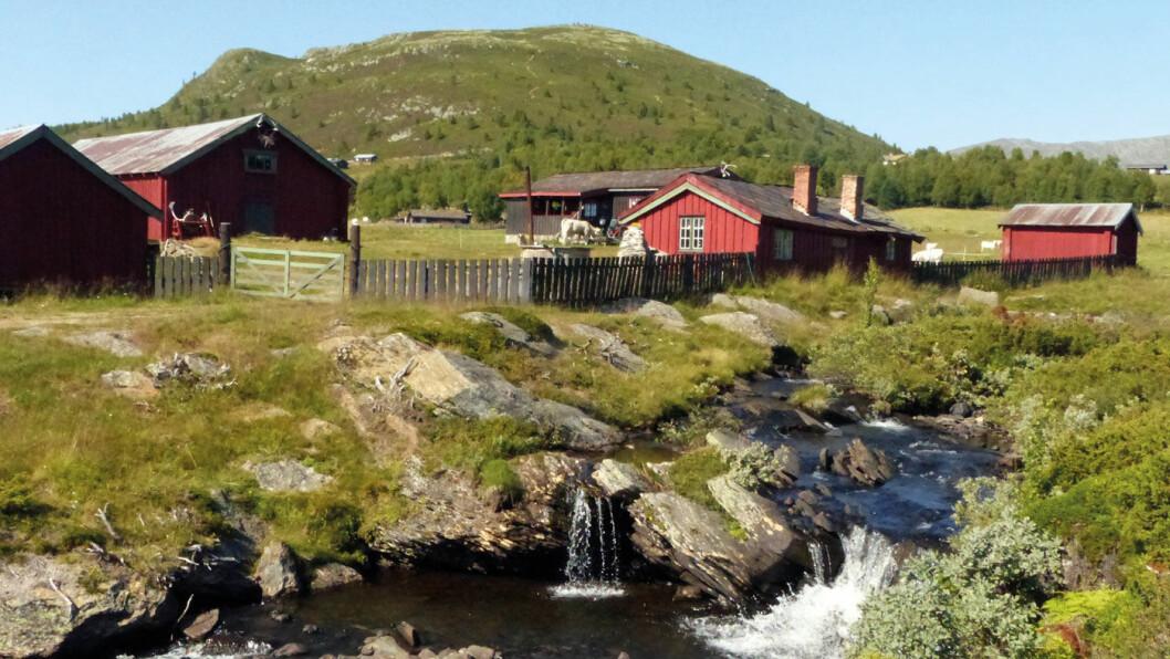 ET LITE STYKKE NORGE: Seteridyll på Sødorpfjellet. Foto: Reidar Stangenes