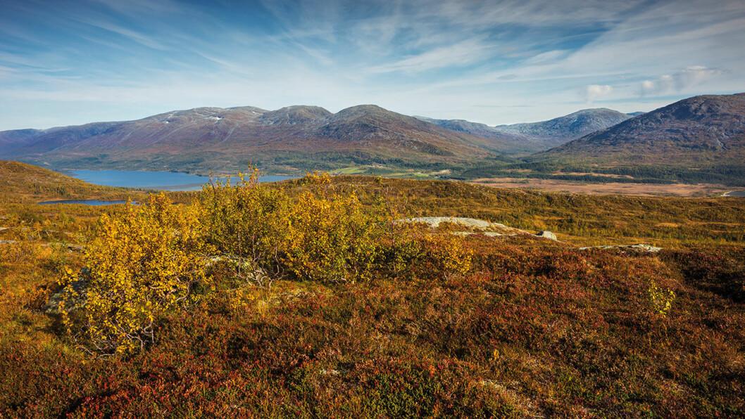OMVEI I FJELLPRYD: Sør i Nordland går Villmarksveien gjennom den grønne og frodige Storfiplingsdalen. Foto: Steinar Johansen