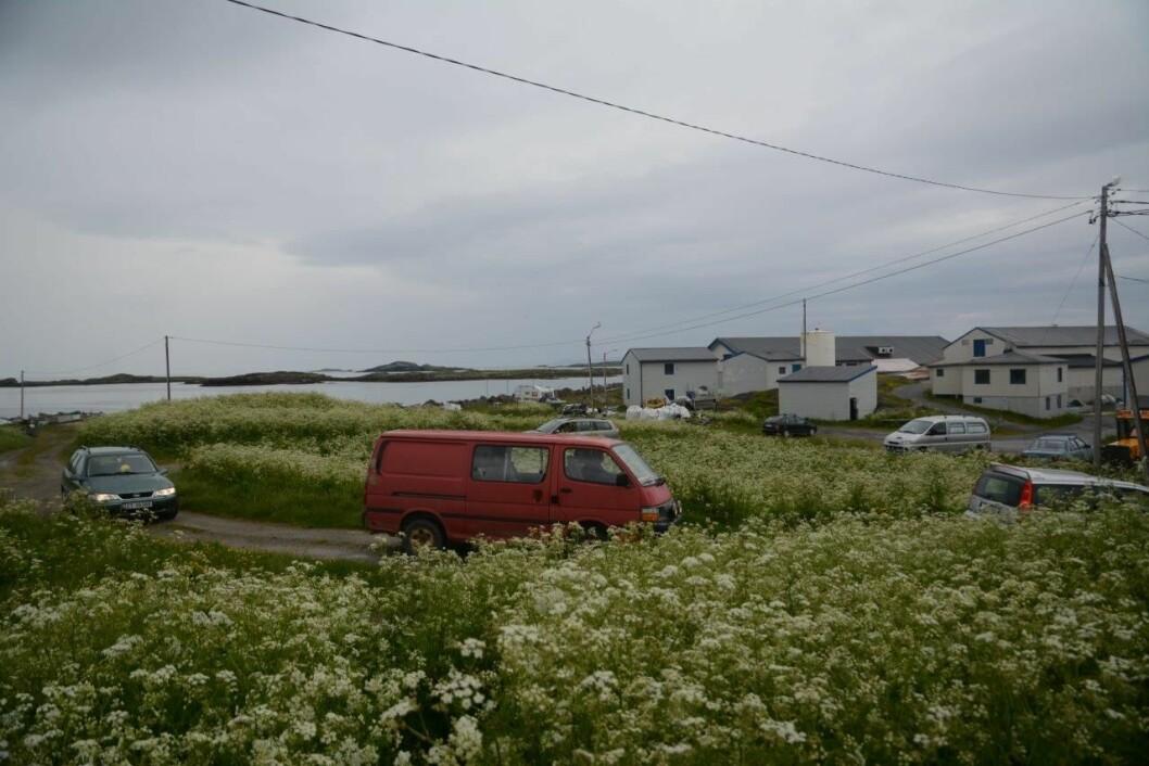 NORDLIGSTE: Rundkjøringen på Ingøy ligger like ved hurtigbåtkaia og fiskemottaket og særmerker seg ved å være stor og frodig – og vanligvis ganske tom. Foto: Per Roger Lauritzen
