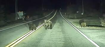 Tesla på autopilot bråstoppet for bjørnefamilien