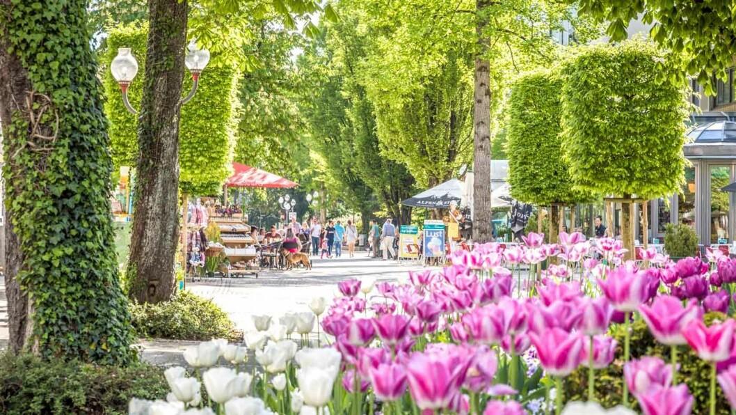 FREDELIG: Gågaten i Bad Reichenhall er to kilometer lang og vakkert beplantet.