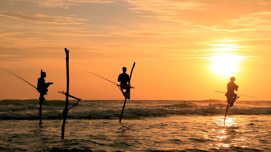 STYLTEFISKERNE: I landsbyen Weligama sitter fiskerne på stylter ute i vannet og fisker.