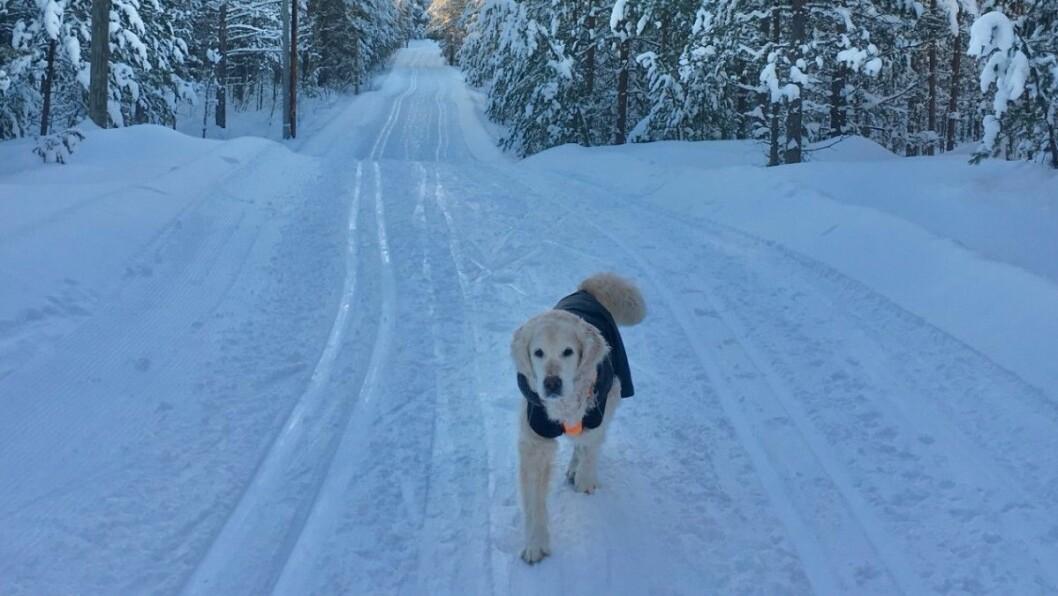 GAMMEL: Emil er 12 år, men trives fortsatt ute på tur. Foto: Privat.