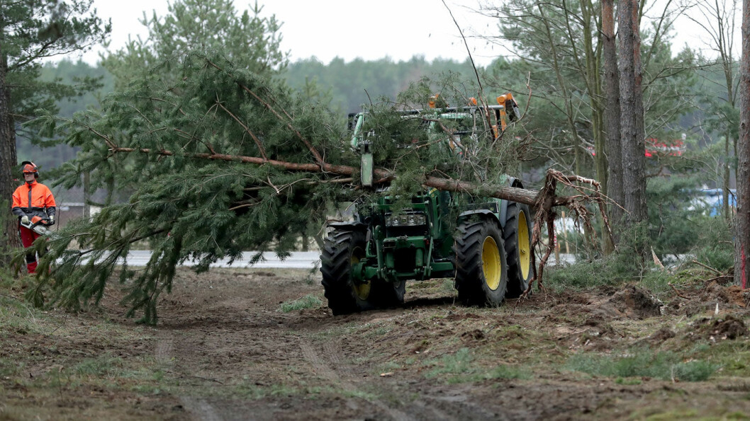 NY START: Arbeidet med å rydde i skog ved området hvor Tesla planlegger ny fabrikk utenfor Berlin, er i gang igjen. Foto: NTB-AP/Michael Sohn
