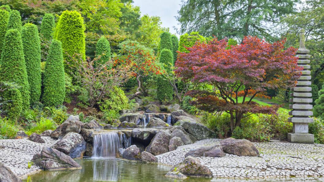 DEN JAPANSKE HAGEN I BONN: Parken var en gave fra den japanske regjeringen i forbindelse med en stor hageutstilling i Bonn i 1979. Foto: Shutterstock