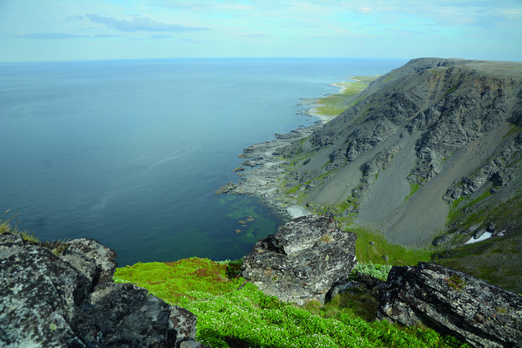 BLANT TOPP TRE: Utsikten er fra Tanahorn i Berlevåg er en reise verdt.