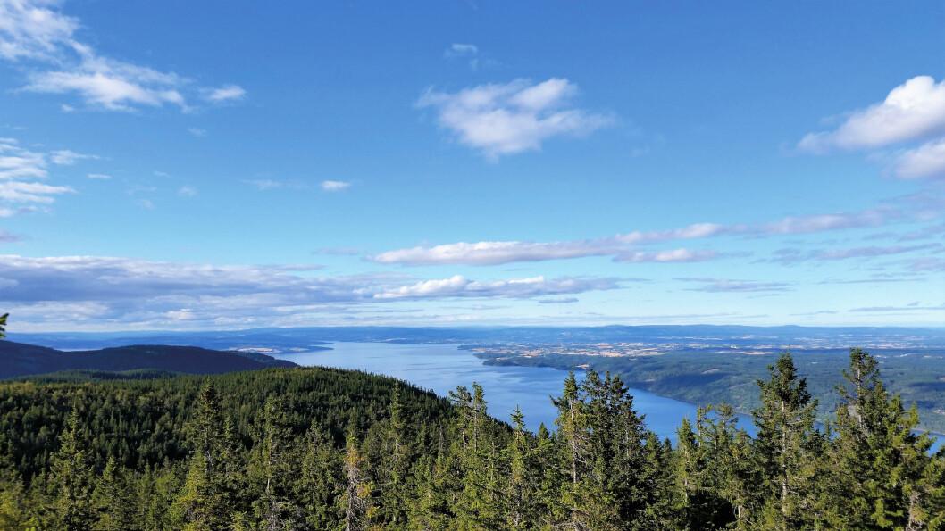 På Skreikampen truer tretoppene med å stenge for utsikten. Her mot Stange, Hamar og Helgøya. Foto: Reidar Stangenes