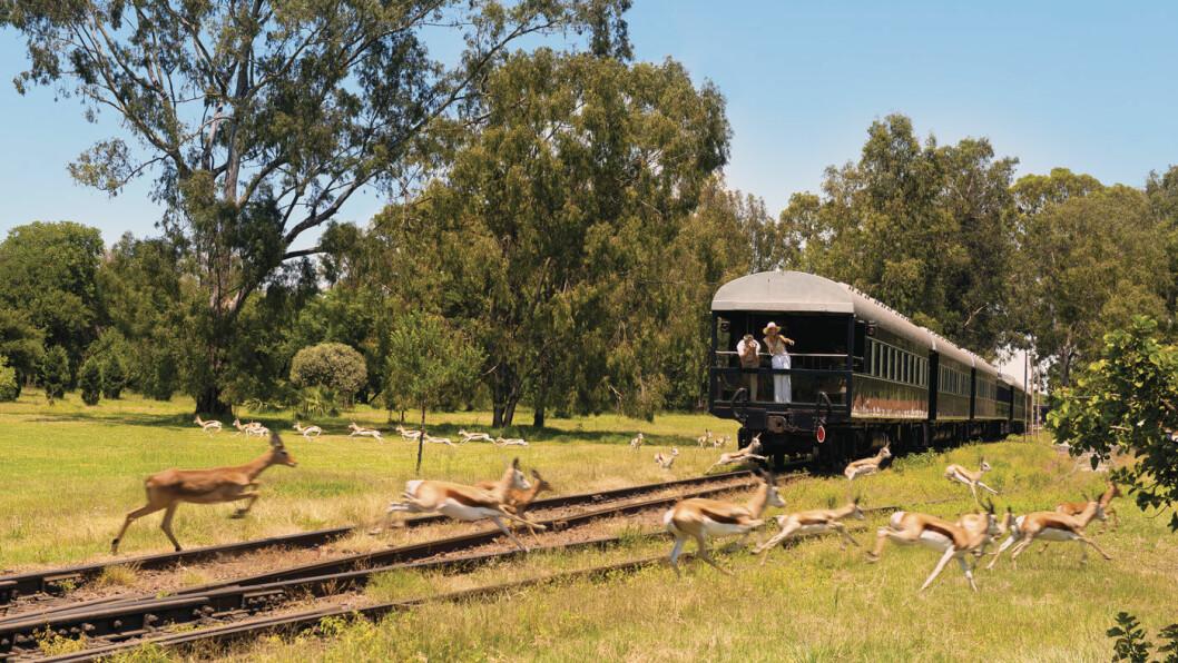 MIDT I NATUREN: Den bakerste vognen på Rovos Rail har en åpen utsiktsbalkong, og her kan du oppleve dyrelivet på nært hold. Foto: Shutterstock