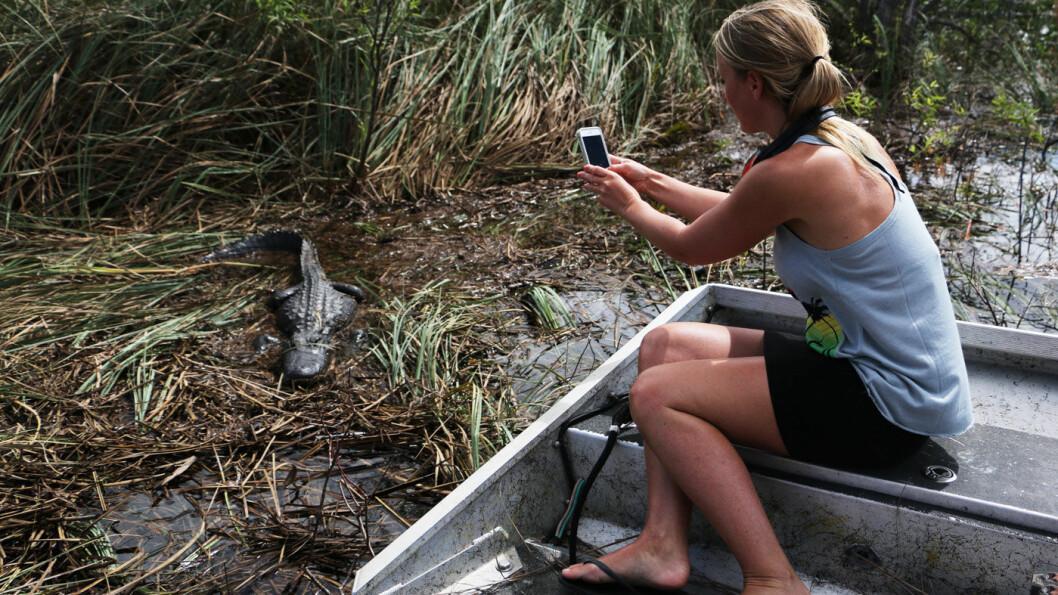FORHISTORISK: I Everglades kan du komme så nær alligatoren at du nesten kan ta på den.