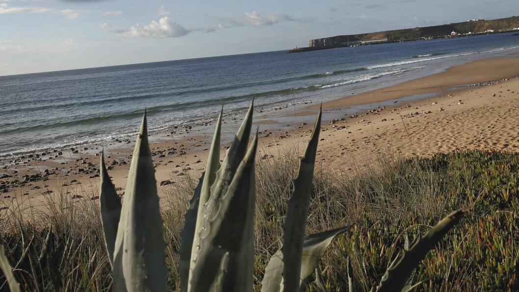 MOT SAGRES: Lange strender og bratte klipper preger langs kysten mot Sagres helt i sørvest. Foto: Mette Randem