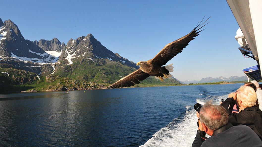 Trollfjorden er magisk. Det topper seg når havørnen flyr over hodet på oss.