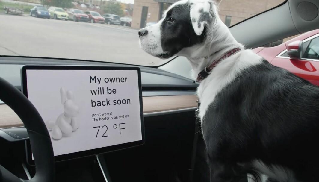 SJÅFØRENS BESTE VENN: Tesla har i to år hatt teknologi som sikrer tilpasset inneklima, slik at en hund kan oppholde seg i en parkert bil.