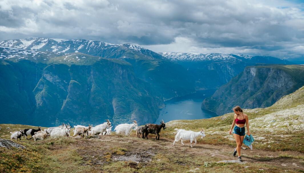 TURFØLGE: Reisebokforfatter Helene Myhre Østervold i Aurland med nysgjerrige geiter i hælene og Aurlandsfjorden i bakgrunnen.