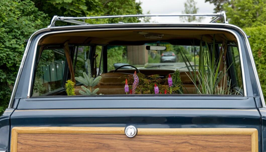 """<span class=""""font-weight-bold"""" data-lab-font_weight_desktop=""""font-weight-bold"""">GRØNT ROM:</span> Halina Sjuve Haanæs gjør familiens Jeep-klassiker til en del av prosjektet Bøler Botaniske, som er foto og inspirasjon fra egen hage og nærliggende, fredede naturområder i Oslo-bydelen."""
